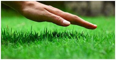 Grass & lawn