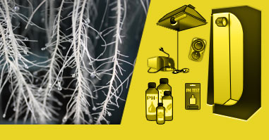 Aeroponics Technology - Customized Growing kits