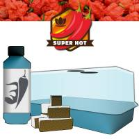 Chilli Growing Kit (Micro air-propagator, Easy Plug Tray 12 cubes, Chilli Focus)