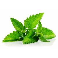 PEPPERMINT 0,17gr - Bio Aromatic Seeds by Sementi Dotto