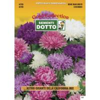 Aster Giant California - Gold Seeds by Sementi Dotto - 1,3gr