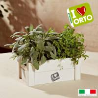 Cultivation Kit Easyorto by Verdemax - Mint and Sage