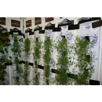 Eco growwall 5 walls