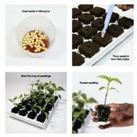 Growth Technology - White Tray Pvc
