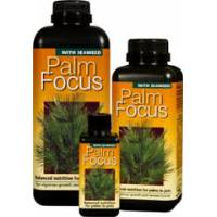 Palm Focus - Growth Technology