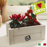 Cultivation Kit Easyorto by Verdemax - Chillies and Cherry Tomatoes