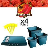Chilli Grow Soil kit PH Controlled (4 Plants)