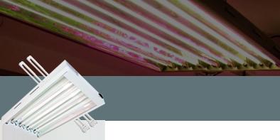 Neon Propagation lighting