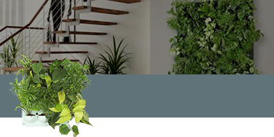 Green Walls | Vertical Gardens