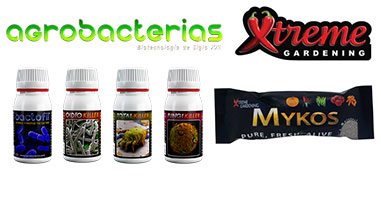 Mycorrhizae are Fungal organisms beneficial to plants
