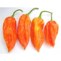 Bhut Jolokia Peach - 10 X Pepper Seeds