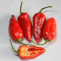 Bhut Jolokia Strain I - 10 X Pepper Seeds