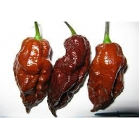 Chocolate Bhut Jolokia - 10 X Pepper Seeds