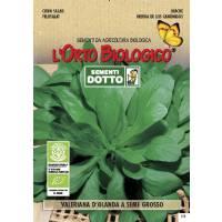 HOLLAND VALERIANE BIG SEED - Bio Garden Seeds by Sementi Dotto