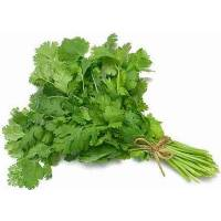CORIANDER 16gr - Bio Aromatic Seeds by Sementi Dotto