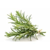 ROSEMARY - Bio Aromatic Seeds by Sementi Dotto