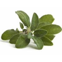 COMMON SAGE 0,85gr - Bio Aromatic Seeds by Sementi Dotto