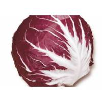 LEAF CHICORY  Early Ball Type 3 - 3,8gr  - Bio Garden Seeds by Sementi Dotto