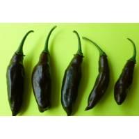 PI-159236 Chilli - 10 X Pepper Seeds