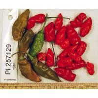 PI-257129 Chilli - 10 X Pepper Seeds
