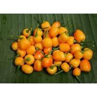 Pimenta Do Rio Branco - 10 X Pepper Seeds