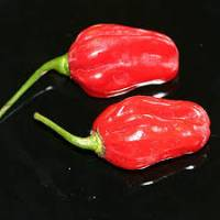 Habanero Senegal Red - 10 X Pepper Seeds