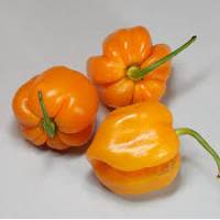 Roatan Pumpkin Habanero - 10 X Pepper Seeds