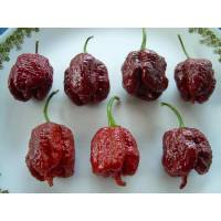 The SuperHot Beast - 10 X Pepper Seeds