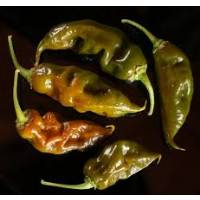 Trinidad Scorpion Green - 10 X Pepper Seeds