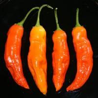 Aji Ahuachapáu - 10 X Pepper Seeds