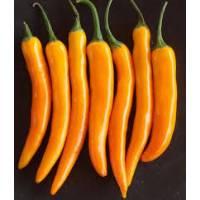 Bulgarian Carrot - 10 X Pepper Seeds