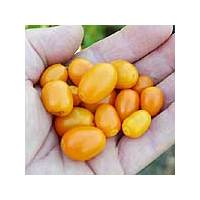 Mini Rocoto PI387838 - 10 X Pepper Seeds