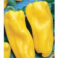 Nocera Yellow - 10 X Pepper Seeds