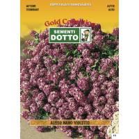 Violet Dwarf Alyssum (Alyssum maritimum) - Gold Seeds by Sementi Dotto 0.6gr