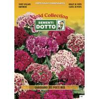 Sweet William (Dianthus barbatus) Mix - Gold Seeds by Sementi Dotto  2.5gr