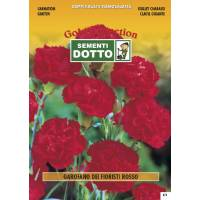 Florist Carnation Red - Gold Seeds by Sementi Dotto