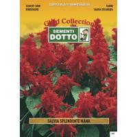 Dwarf Scarlet Sage (Salvia splendens) - Gold Seeds by Sementi Dotto 0.23gr