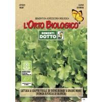 Organic Seeds Lettuce Four Seasons