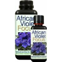 African Violet Focus - Growth Technology