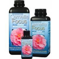 Camellia Focus - Growth Technology