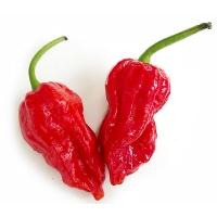 7 Pot Barrackpore - 10 X Pepper Seeds