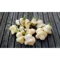 Aji White Fantasy - 10 X Pepper Seeds