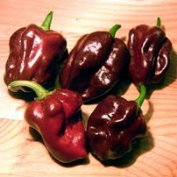 Black Stinger - 10 X Pepper Seeds