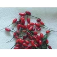 Catarina - 10 X Pepper Seeds