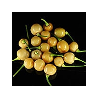 CGN22835 Round - 10 X Pepper Seeds