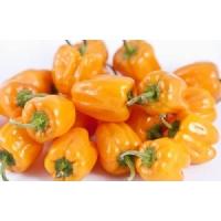 Habanero Naranja Picante - 10 X Pepper Seeds