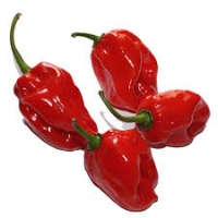 Habanero Red - 10 X Pepper Seeds
