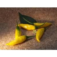 Inca Hot - 10 X Pepper Seeds