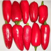 Jalapeño Conchos - 10 X Pepper Seeds