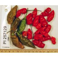 PI-257129 Chilli - 10 X Pepper Seeds